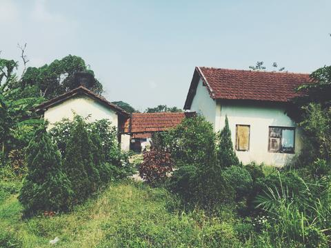 Image of old residential houses behind overgrown bushes.