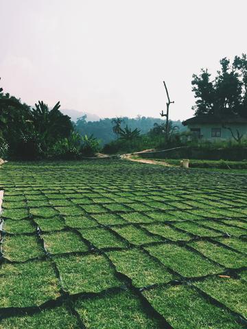 Image of swathe of grasses.